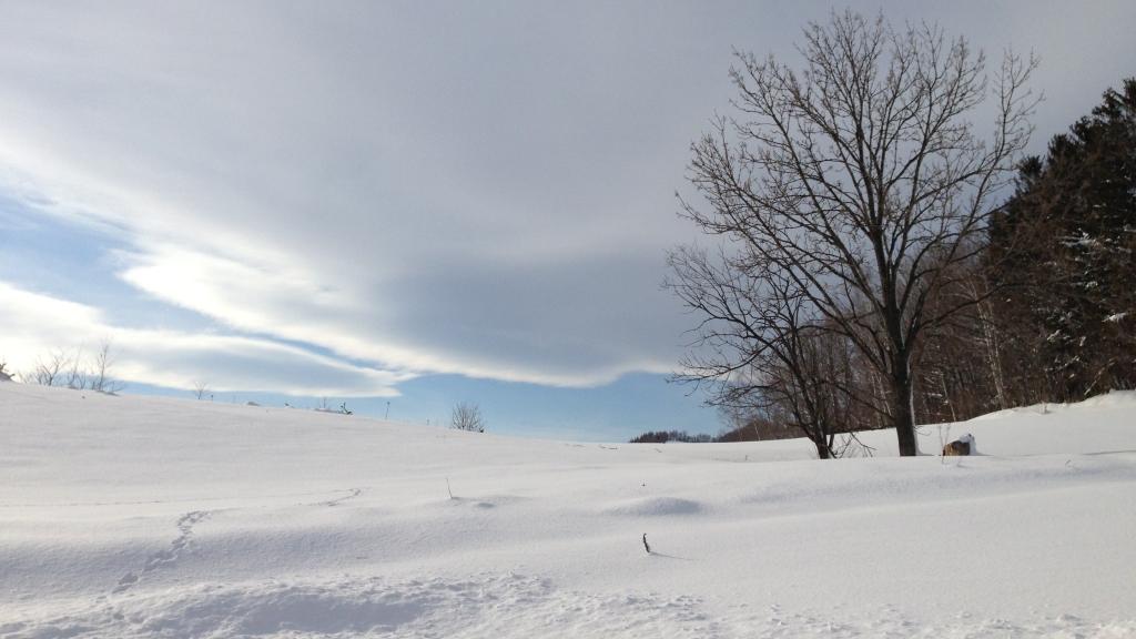 雪景色の中に2本の大きな木がたっています、雪雲の間から薄青い空がのぞいています。